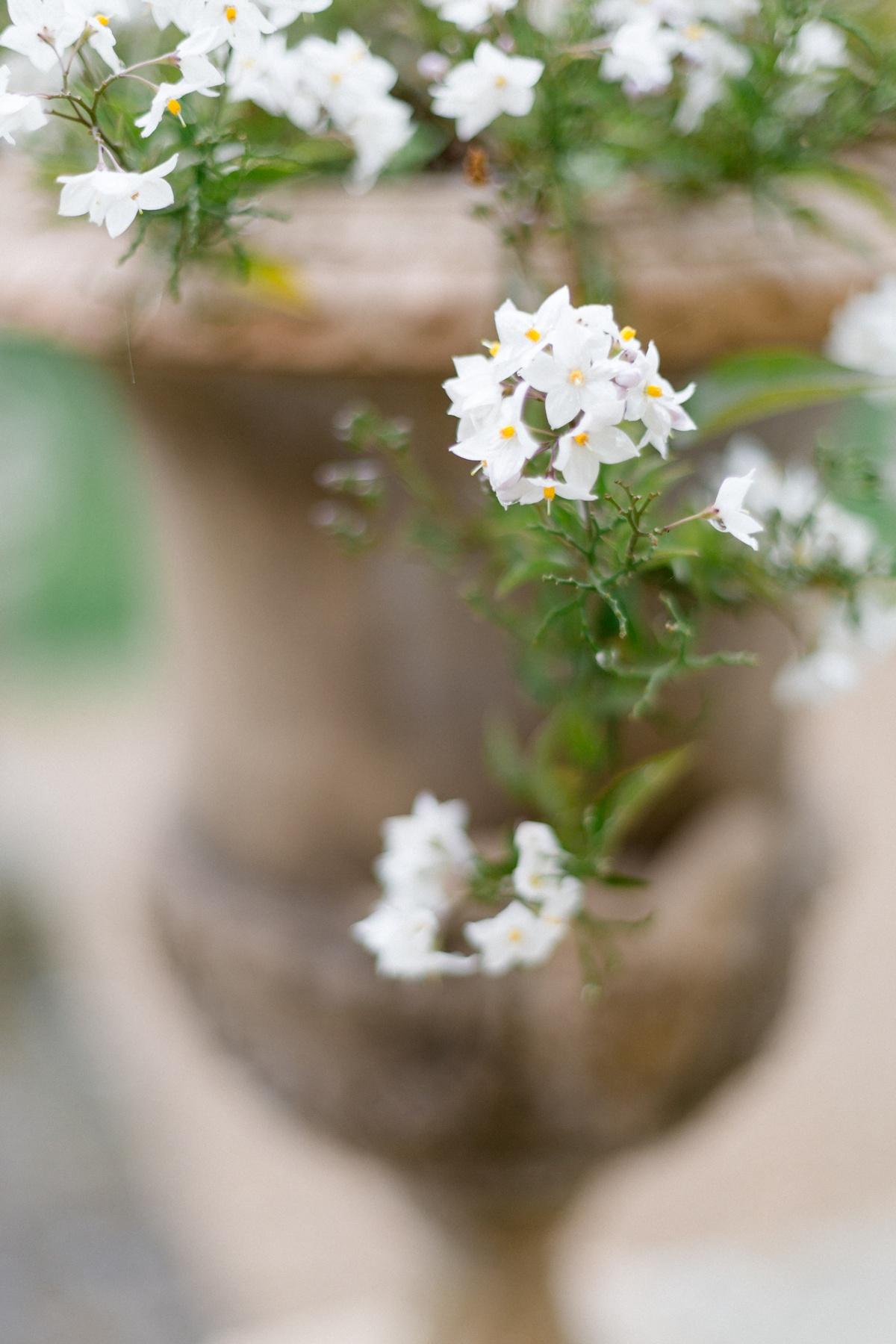 Fleurs blanches mariage château