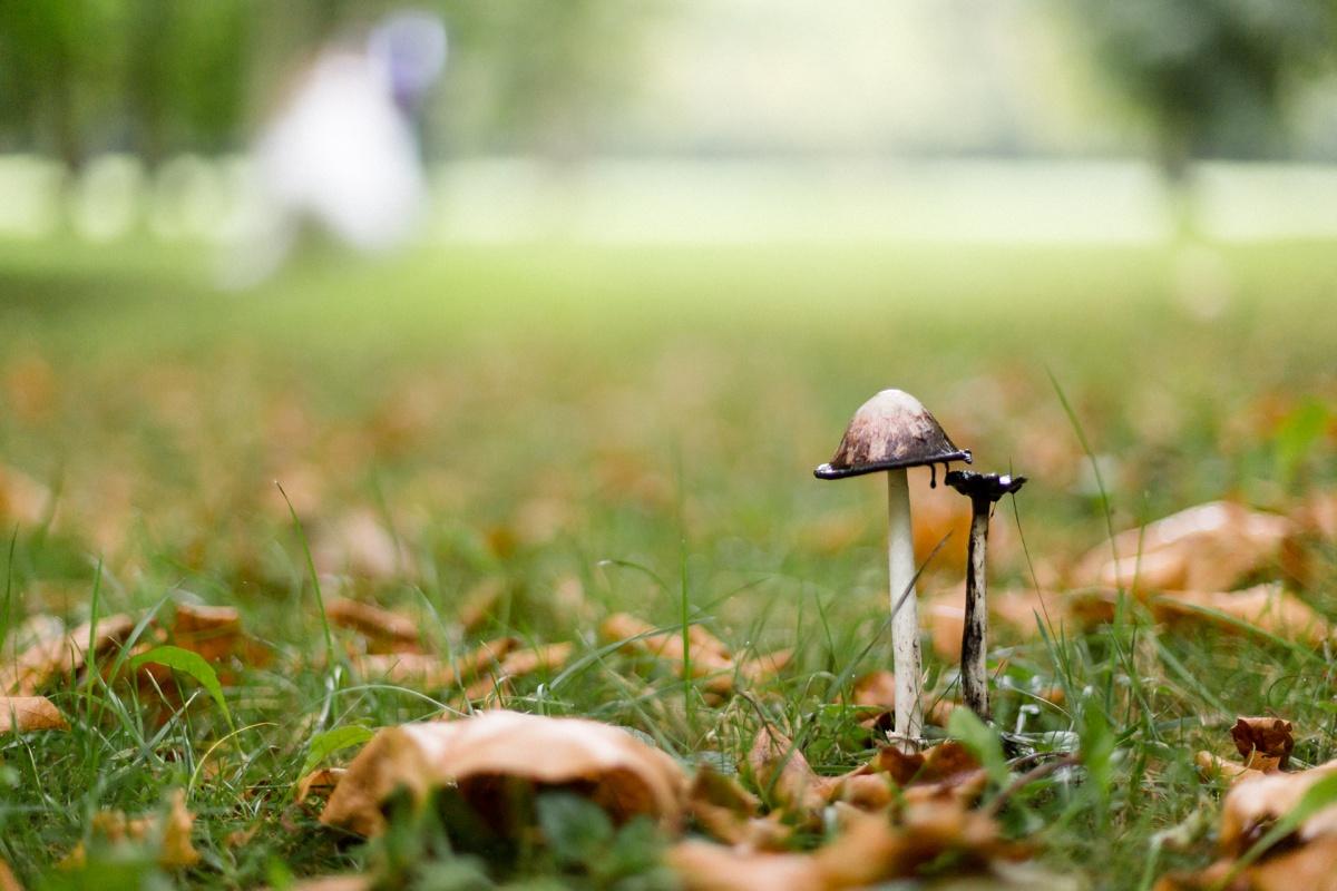 photographe détail mariage nature